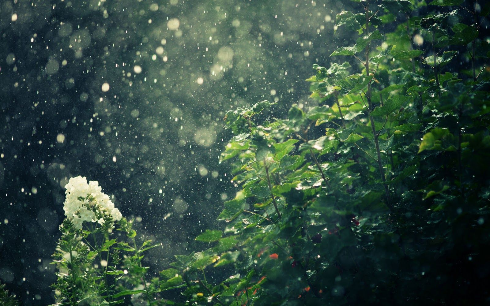 Rain Falling On Trees Rain Wallpapers Amazing Nature Photography Nature Photography