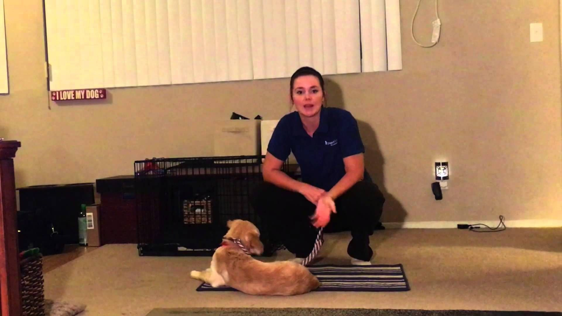 How to calm down your dog in the home part 2 calm down