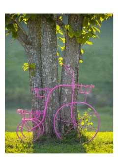 Bicycle and Tree artwork