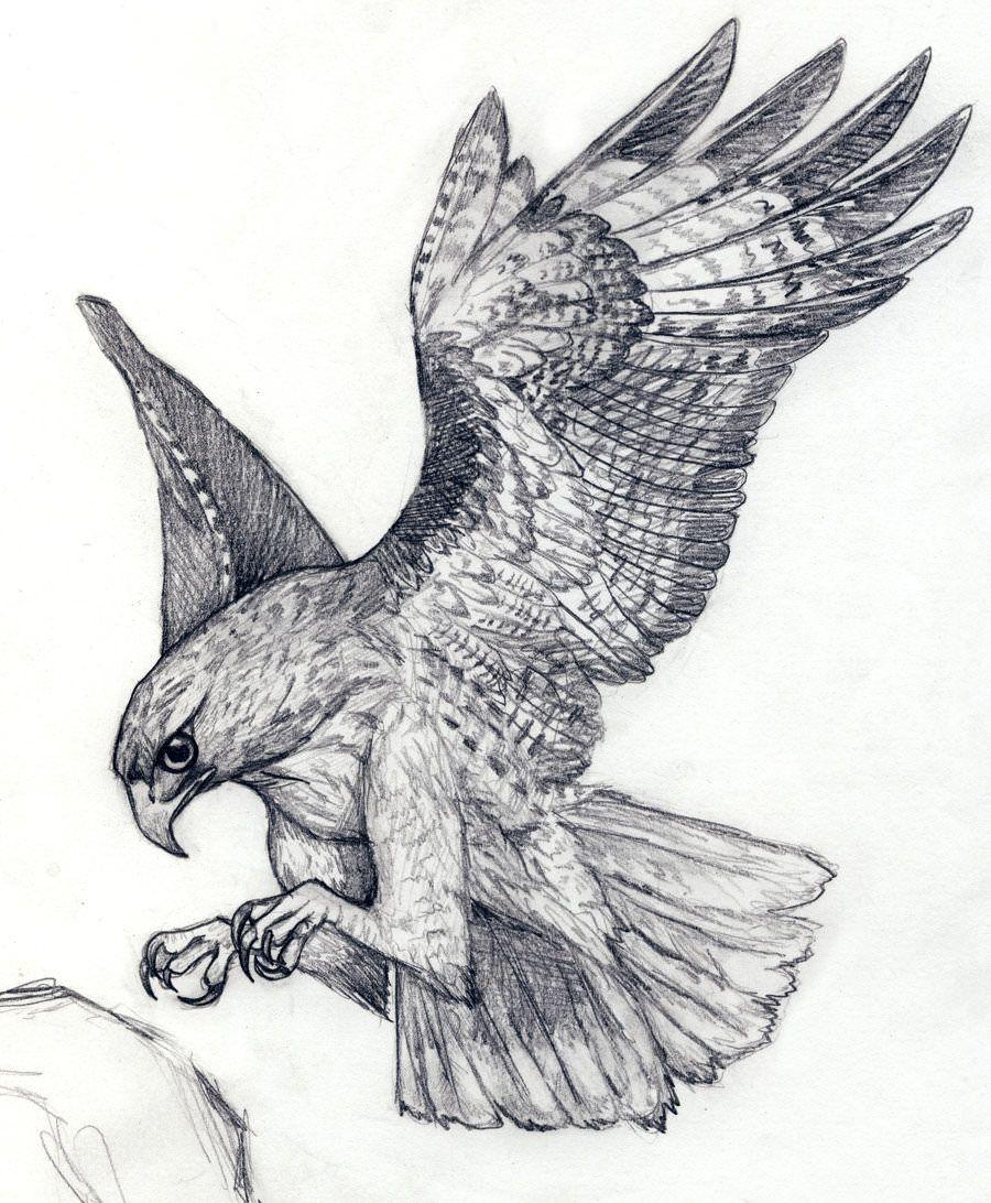 Hawk Landing Drawing Hawk Tattoo Falcon Tattoo Eagle Drawing