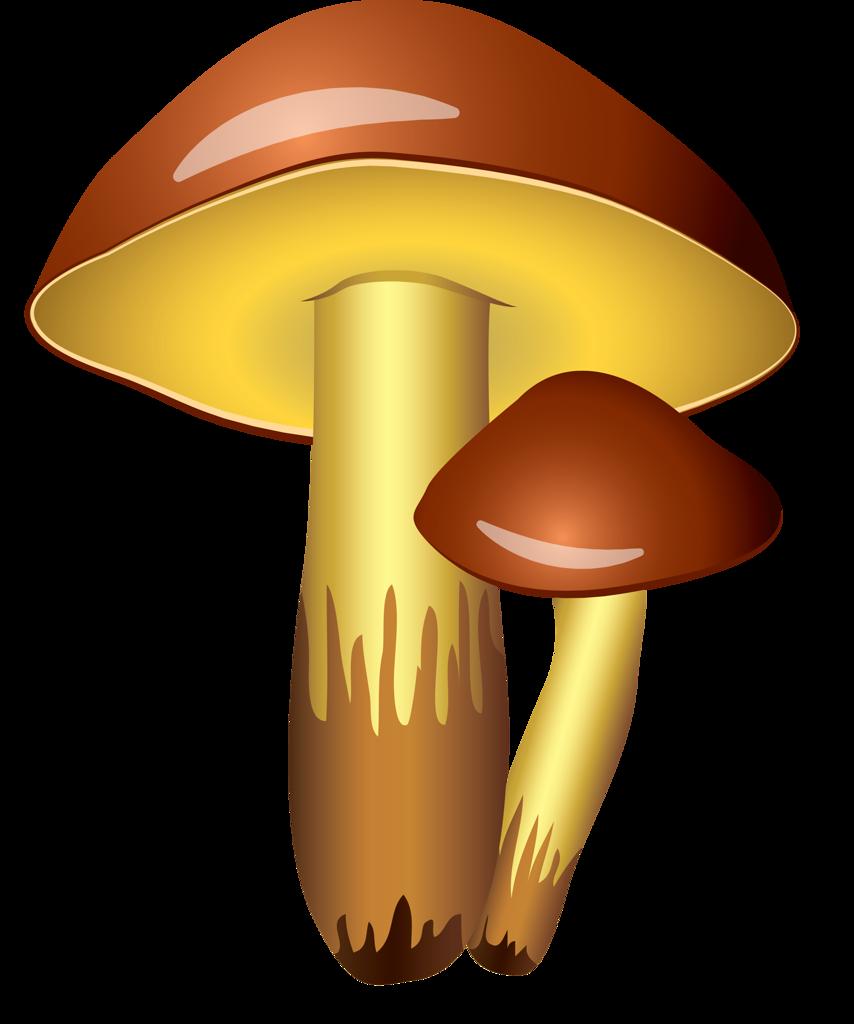 Картинки грибочки без фона