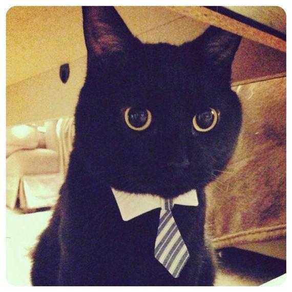 Lil čierna mačička pics