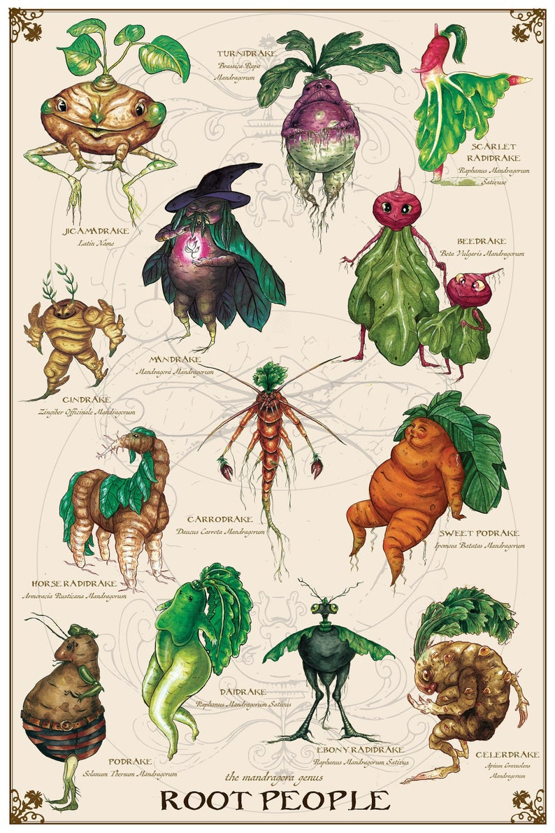 Photo of Mandrake Genus Print, Botanical Illustration, Vintage Vegetable Botanical Print, Kitchen Vegetable Poster, Botanical Art Poster, Halloween