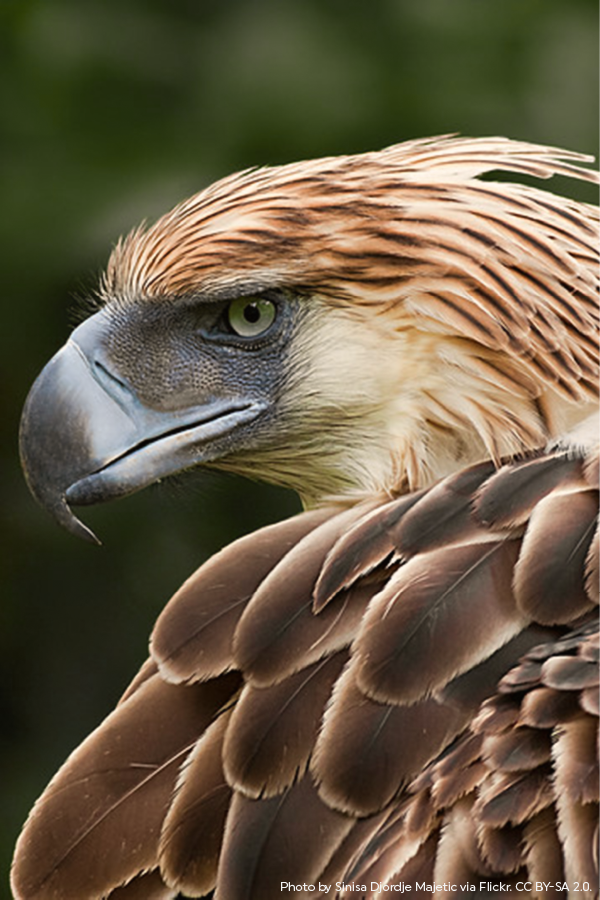 Earth Day 2019 Philippine eagle, Endangered animals