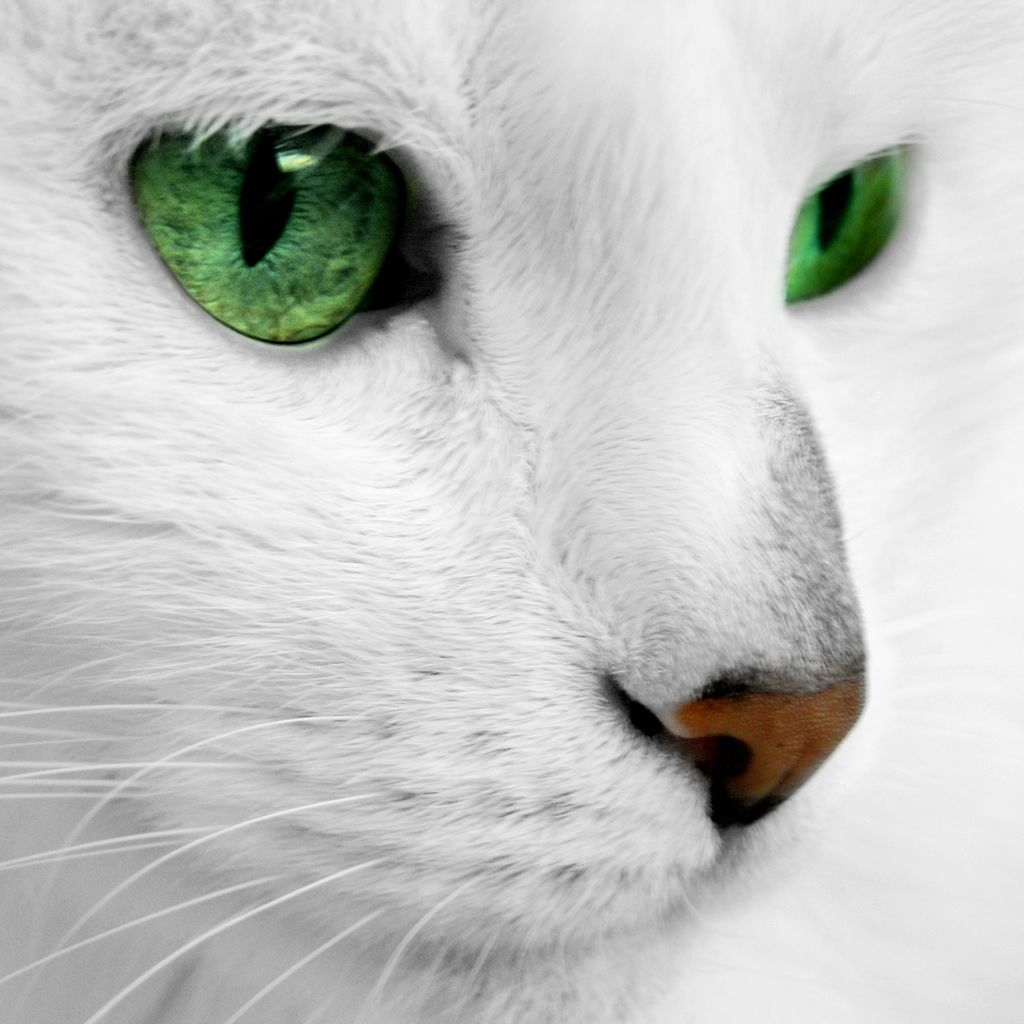 Emerald Cat Eyes IPad Wallpaper