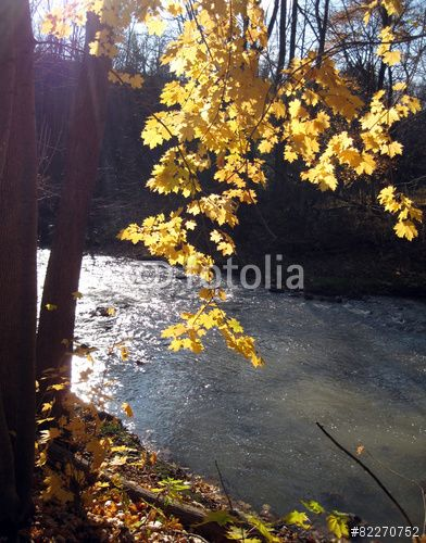 Afternoon sun lights up autumn leaves on trees along the river.