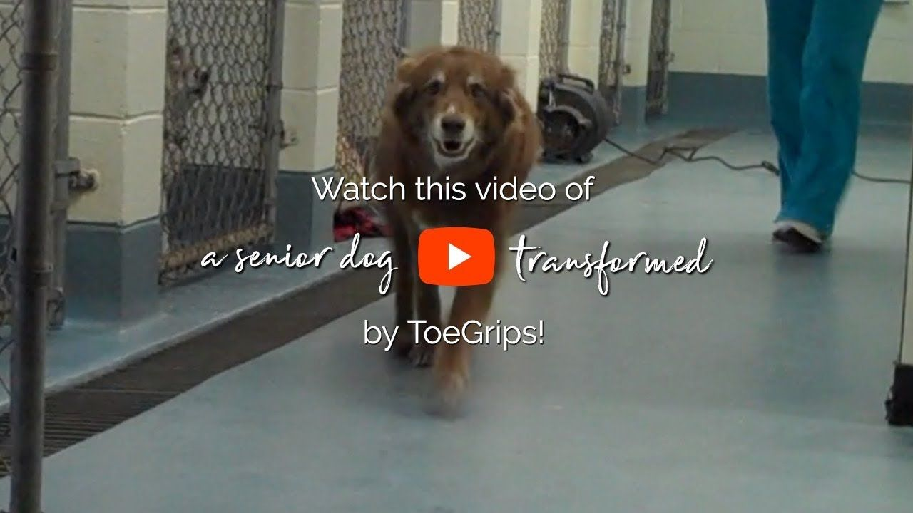 ToeGrips Before & After Dog essentials, Pet parent, Dog