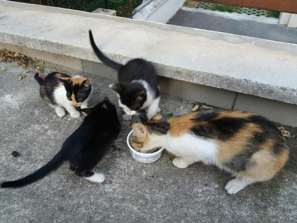 I've been feeding these stray babies and their mum for