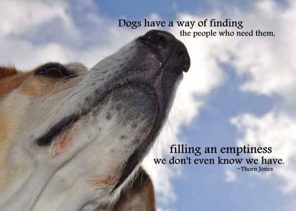 Dogs In Heaven Quotes Loss Of A Dog Pinterest Dogs Dog Quotes