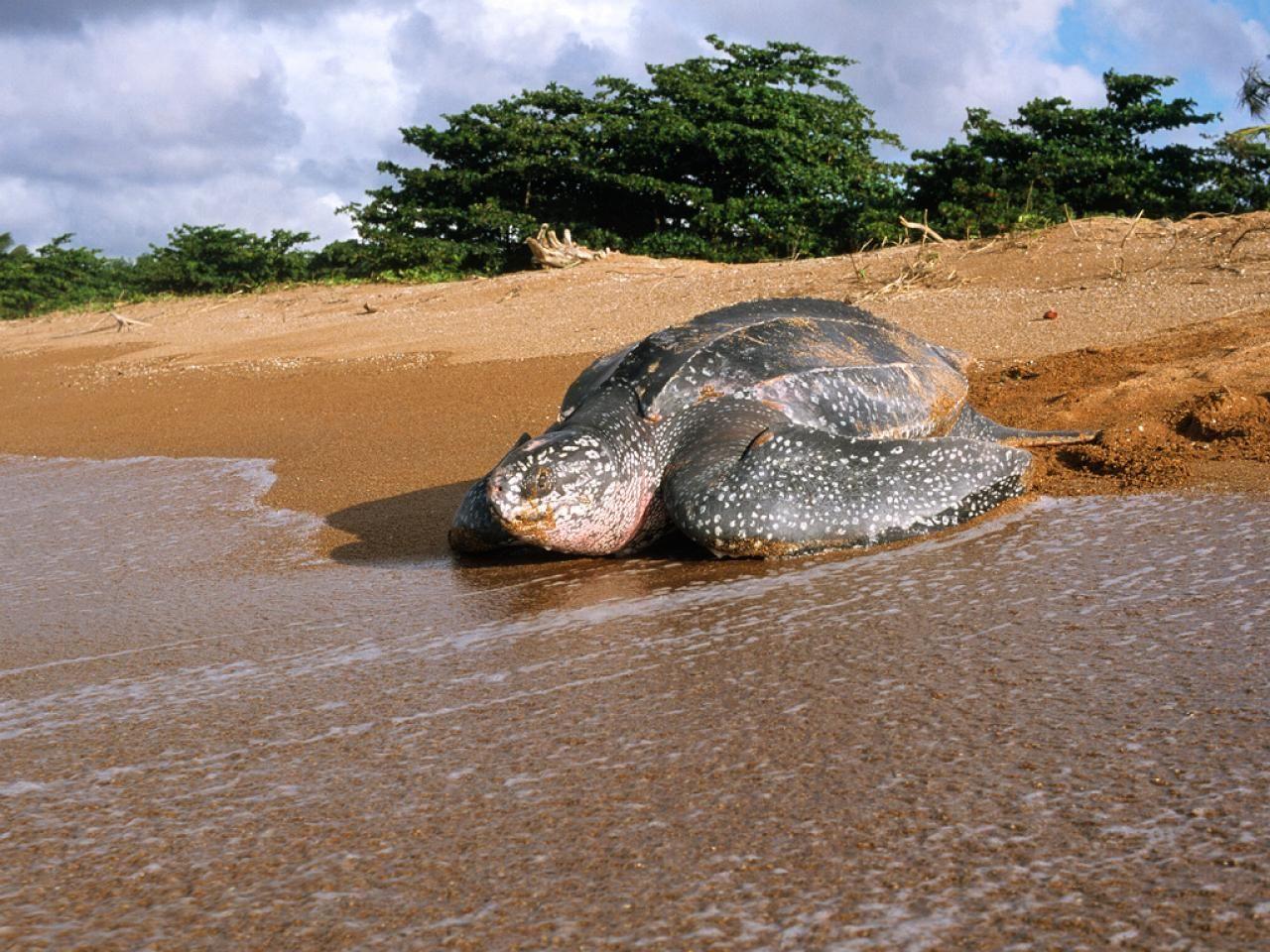 georgetown guyana beaches