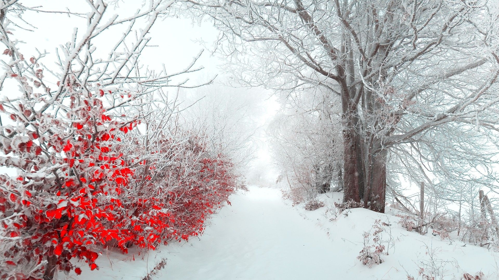 Winter Snow Trees Red White Flowers Pathway Wallpaper Winter Wallpaper Winter Wallpaper Hd Christmas Landscape