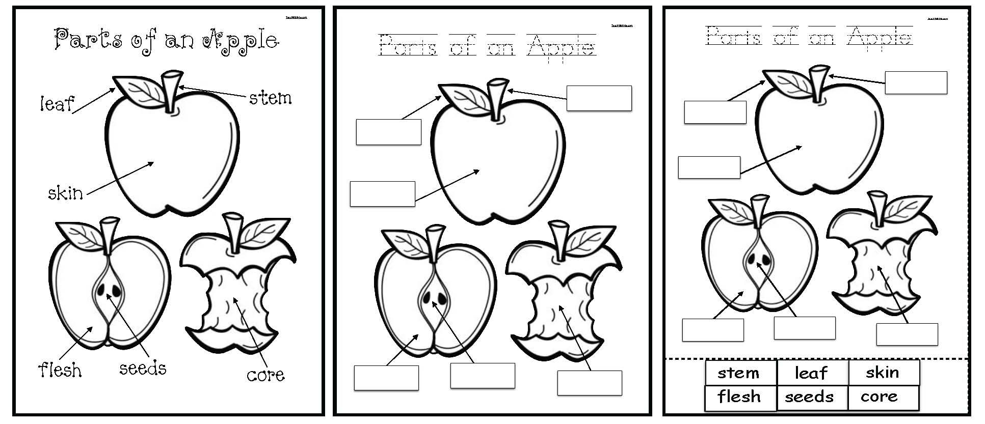 Parts Of An Apple Emergent Reader Packet Mit Bildern