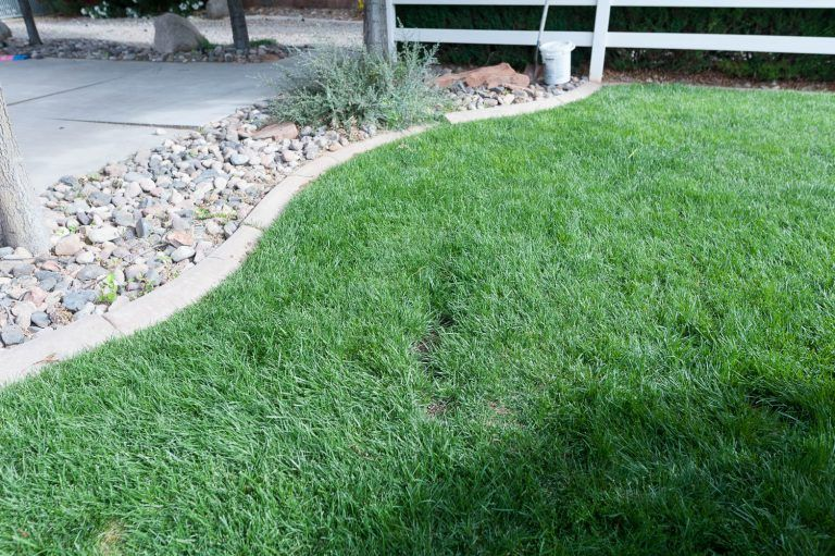 How to remove surfacing tree roots Tree roots, Tree root