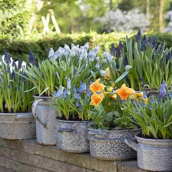 Photo of Old Pots and Pans as Planters