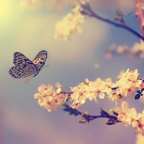 Pois não há nada que me permita saber, com toda certeza e rigor, sem nenhuma margem de dúvida, se eu sou verdadeiramente um homem, que um dia sonhou que era uma borboleta, ou se eu sou uma borboleta, sonhando que é um homem... (Chuang Tsu)