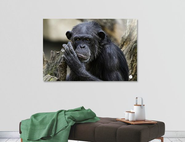 Discover «Chimpancé», Numbered Edition Aluminum Print by José Luis  Vilar Jordán - From 55€ - Curioos