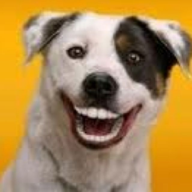 Doggy Dentures Smiling Dogs Dog Teeth Dogs