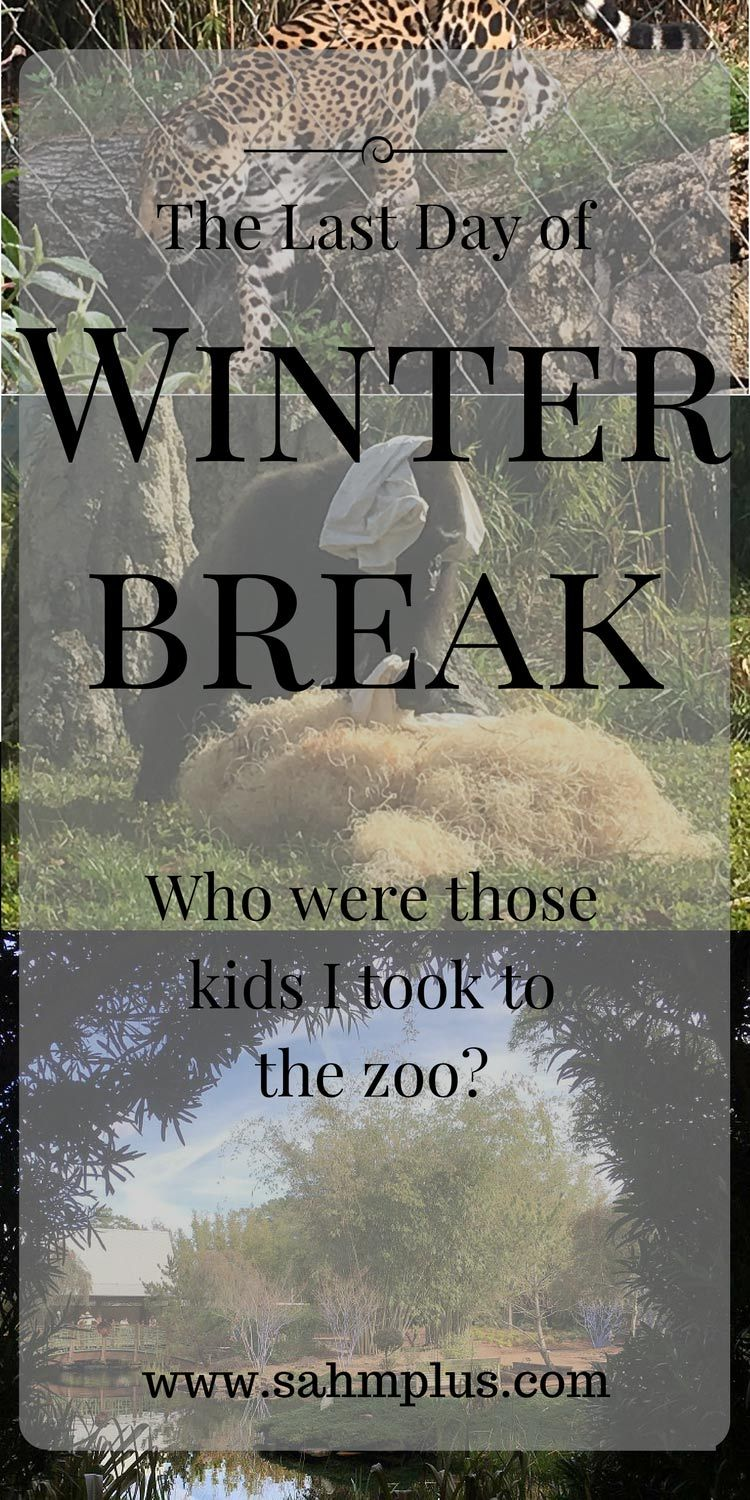 A personal story reflecting on our outdoor adventure at the local zoo on the last day of winter break. Whose kids are they?