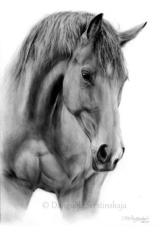 Realistic horse drawings paintings realistic art by danguole