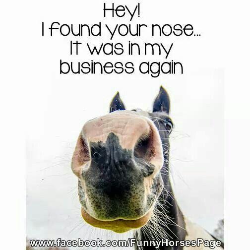 Nosen around