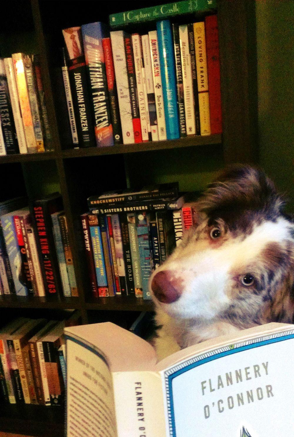 Writerly Dog Bookshelfie.