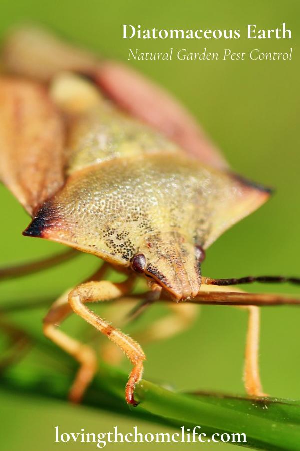 Control Garden Pests Naturally With Diatomaceous Earth De