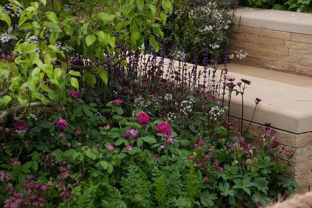 Homebase Garden Adam Frost Chelsea 2013 Garden Plant Combinations Plants