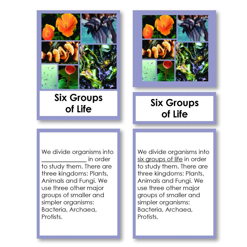 Six Groups Of Life Kingdoms Classification 3 Part Cards