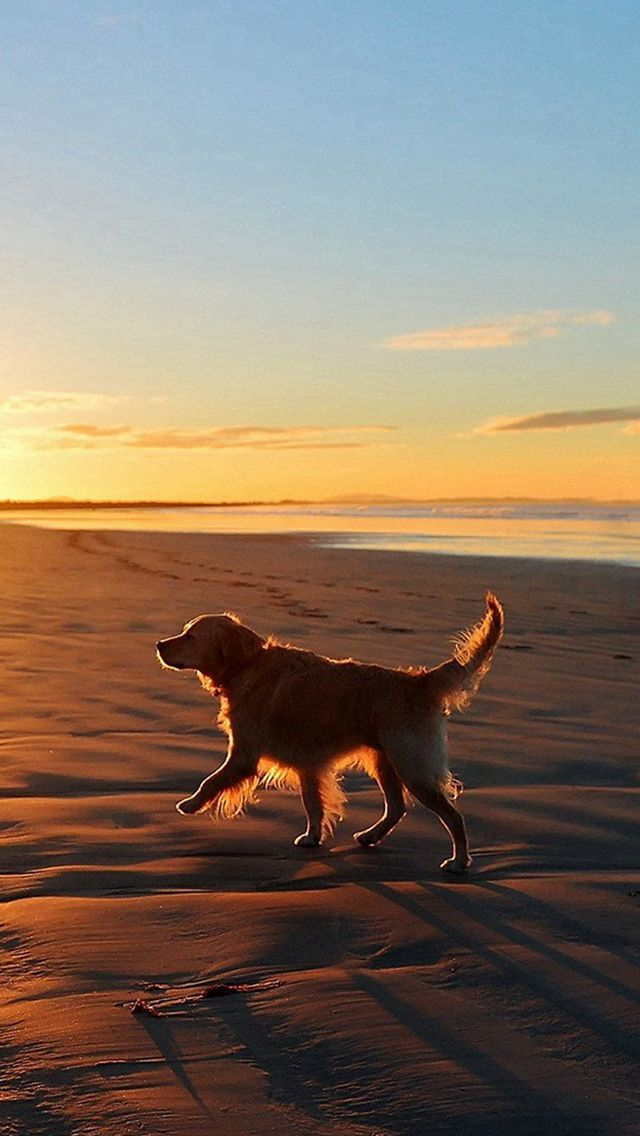 Lonely Walking Dog Sea Beach Iphone 5s Wallpaper Cute Dog Wallpaper Baby Dogs Puppies