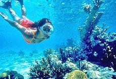 Cuba coral reef snorkling
