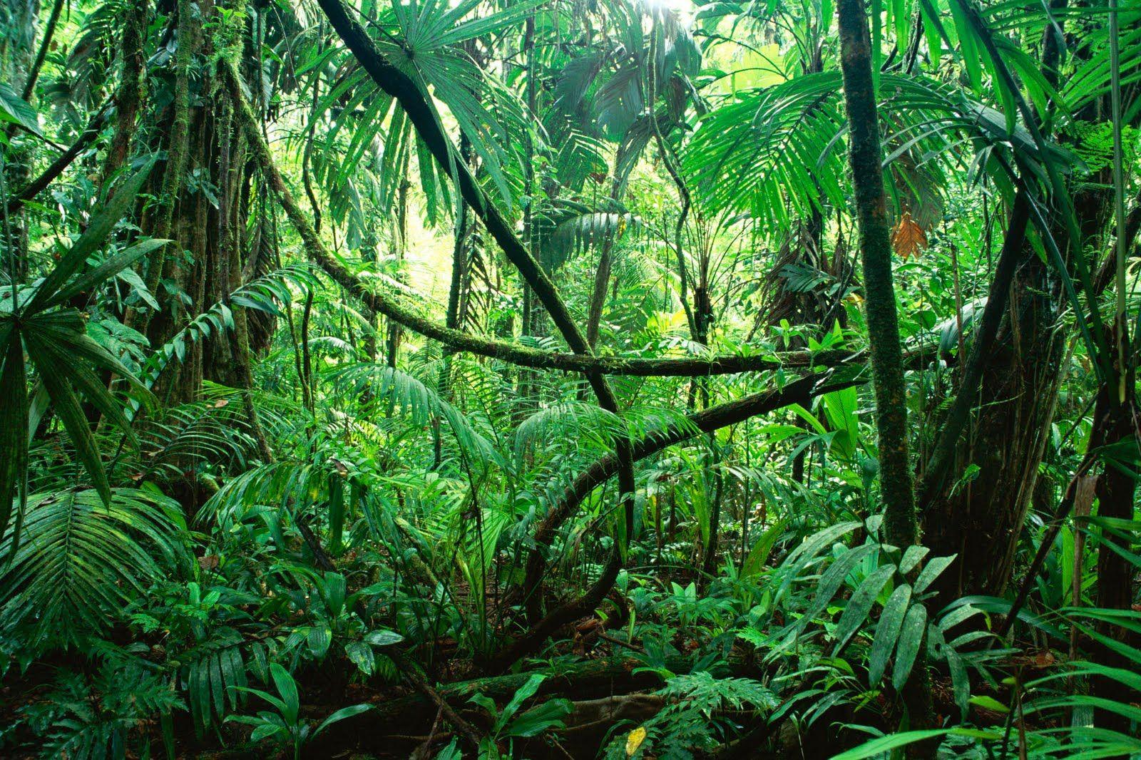 Rainforest Amazon Forest Jungle Sounds Tropical Rainforest