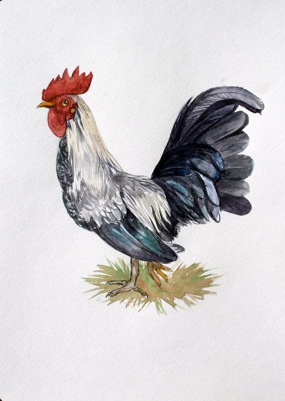 Rooster Watercolor Painting Watercolor Illustration Kitchen Decor  Watercolor Original Painting Silver Black Rooster Home Decor Painting