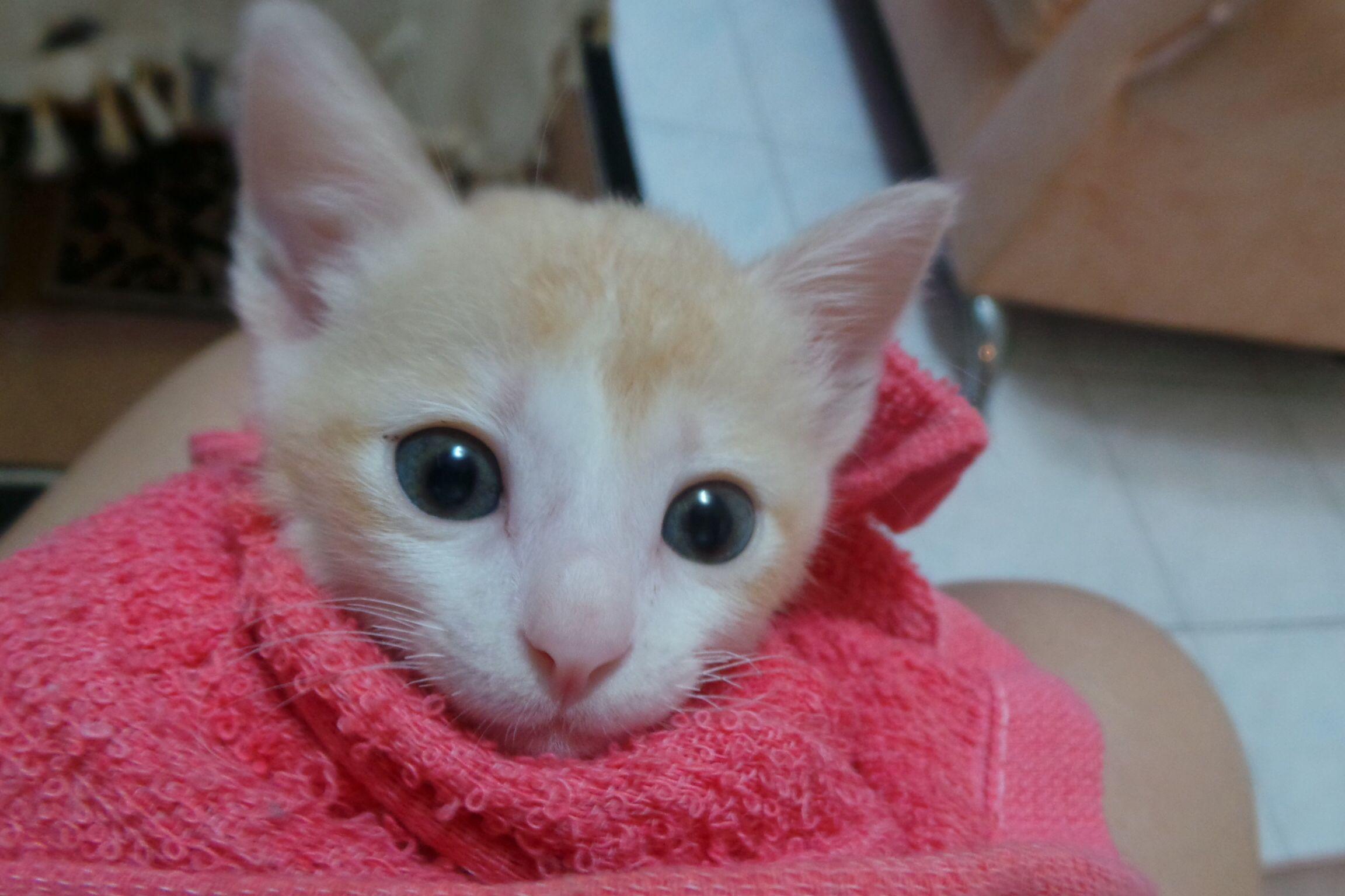 Taking Bath Kaby Kittens Animals Cats
