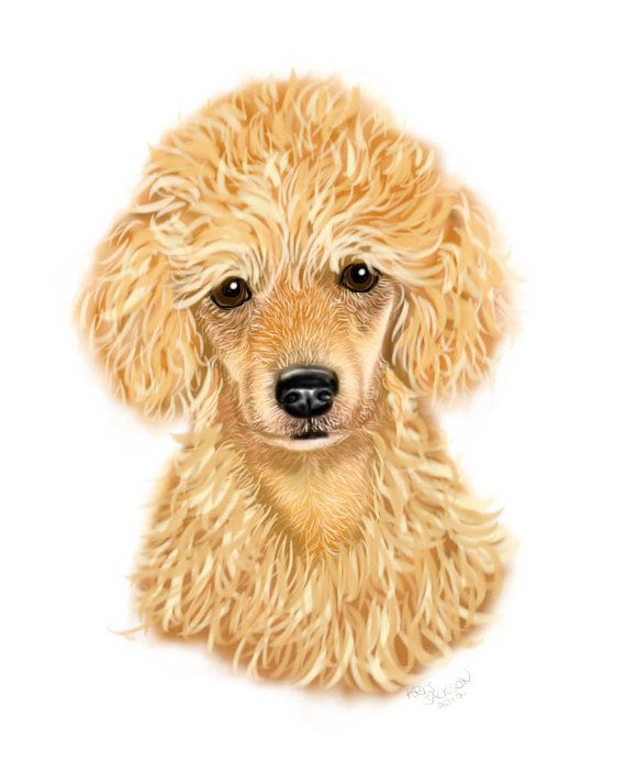 b1982715faa7 4 Apricot Poodle Puppy note cards | Awesome Animal Art | Poodle ...