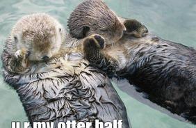 http://blog.wtfconcept.com/wp-content/uploads/2011/05/my-otter-half.jpg