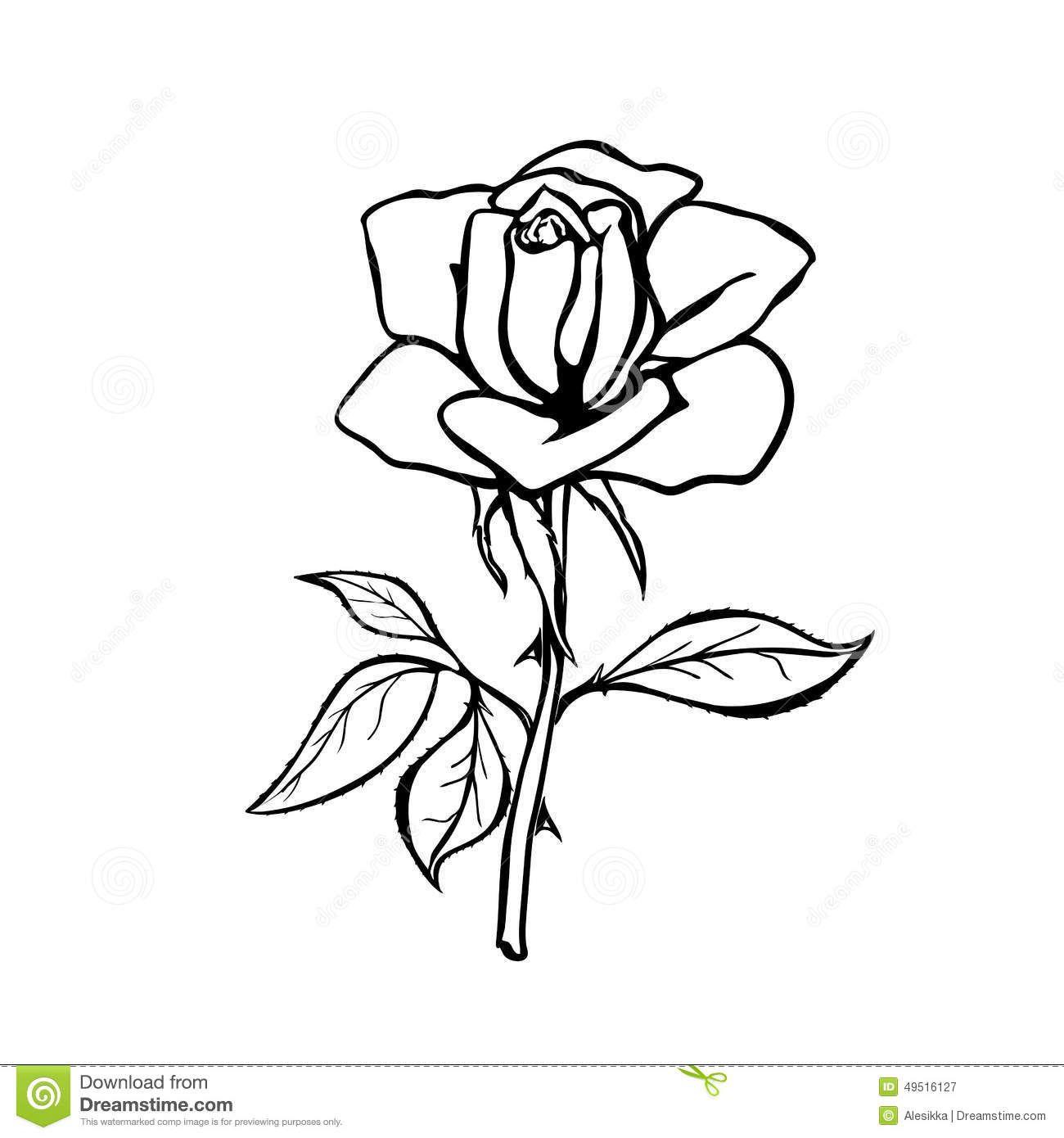 Realistic Rose Drawing Outline Fai Da Te Hobby