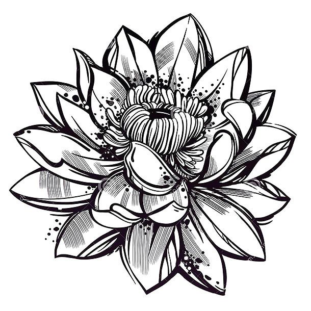 Sketch Style Lotus Flower Tattoo Design Lotus Flower Tattoo