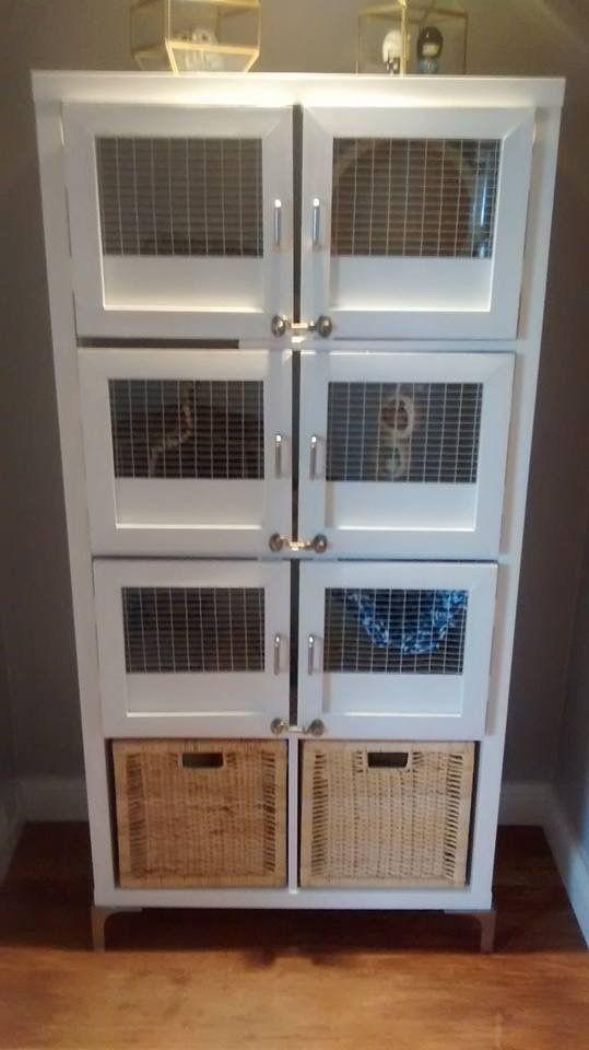 Degu Cage Ikea Kallax Pet Kitten Degu Cage Degus