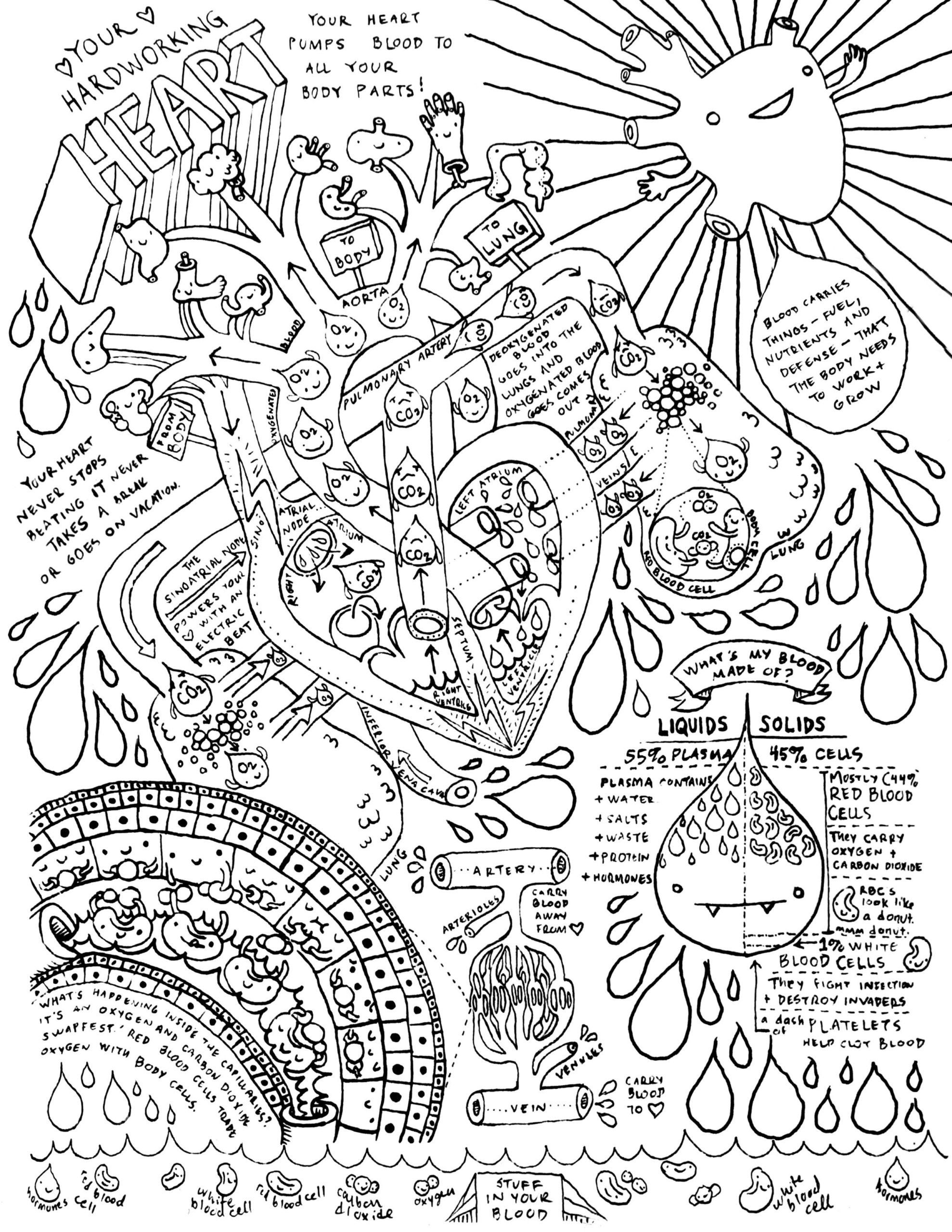 7th Grade Science Worksheets   Anatomy coloring book [ 2560 x 1978 Pixel ]
