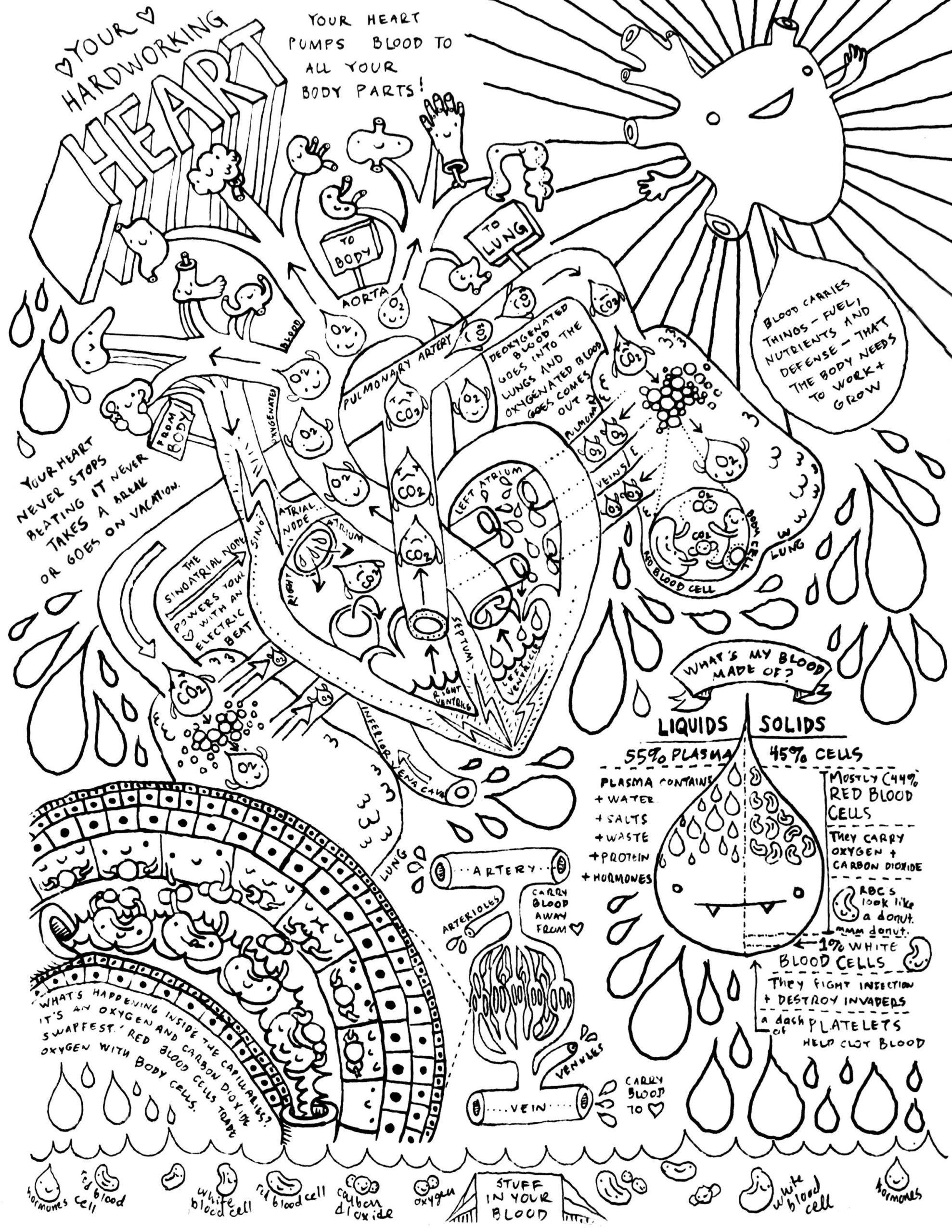 medium resolution of 7th Grade Science Worksheets   Anatomy coloring book