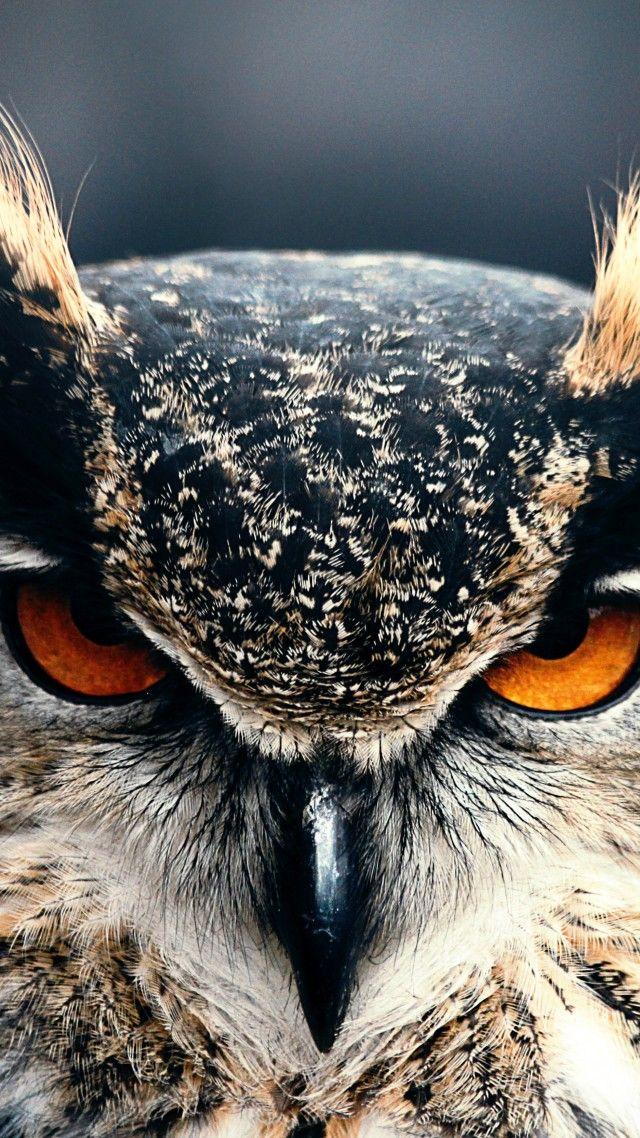 Owl, 4k, HD wallpaper, Eyes, wild, nature, gray (vertical