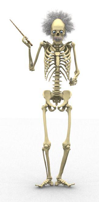 Skeleton Professor from Anatomy & Physiology Online | Pocket Anatomy ...
