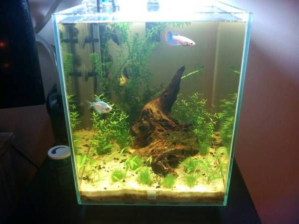 Fluval Chi 5G New Scape And Filter