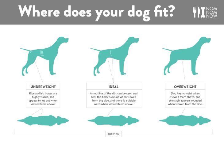 Monkoodog Smartdog Tips Dogs Facts Weight Dog Weight Dog