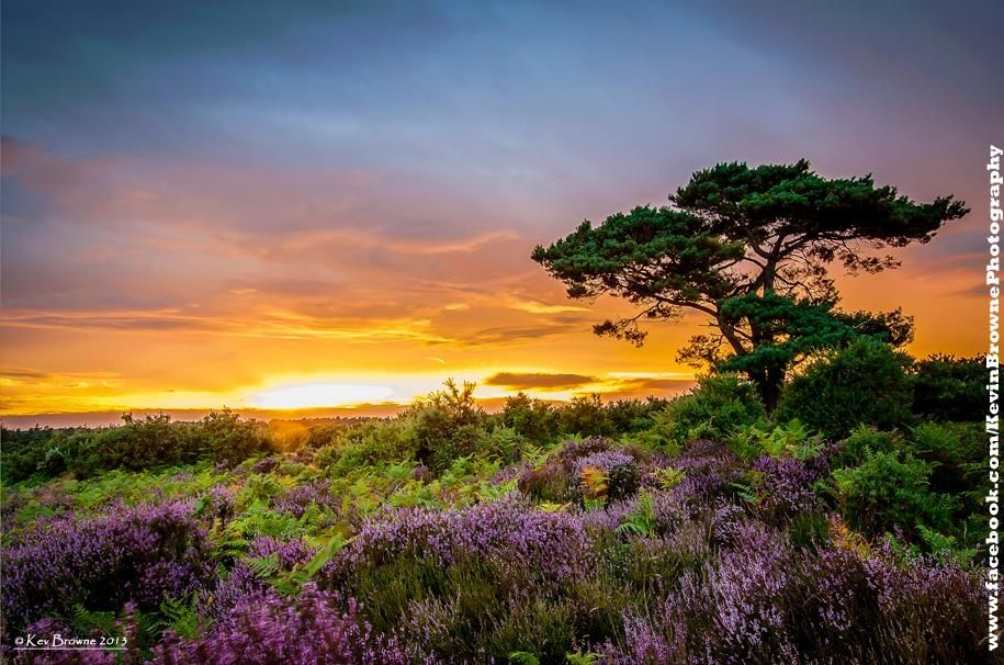 Kev Browne Bratley View Sunset Bratley View Car Park Car Park For Mogshade Hill Sunset New Forest Calming Pictures