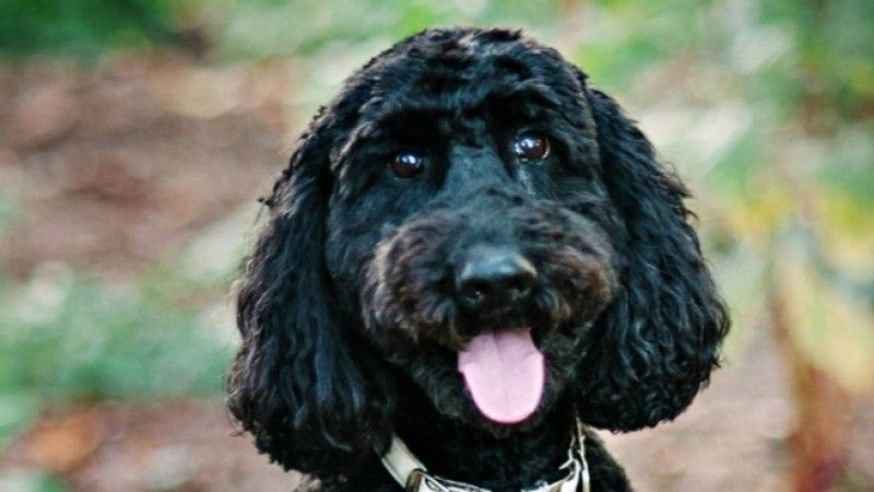 Papa Dawg Dog Name The Papadawg Dog Nickname Papi Papadoo
