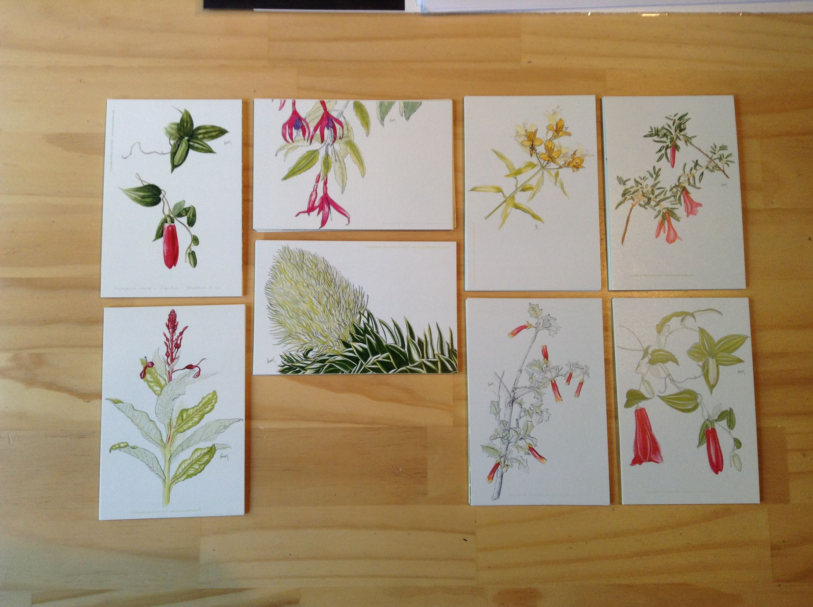 My new 8 postcard set <3 #botanicalart #ilustracionbotanica