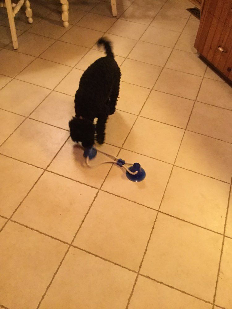 The Tug Toy Toys Aggressive Dog Your Dog