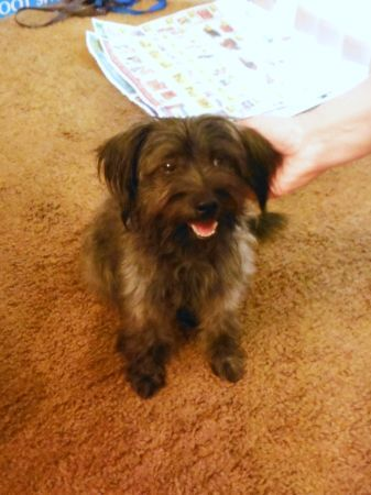 Craigslist Houston Pets For Sale By Owner