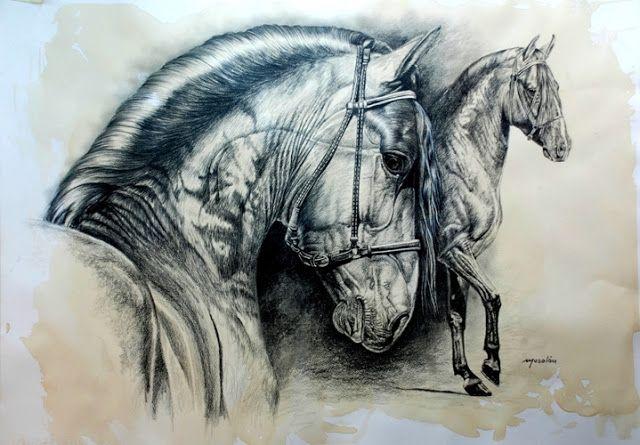 Dibujos De Caballos En Carboncillo Cuadros De Caballos Dibujos De Caballos Cabeza De Caballo